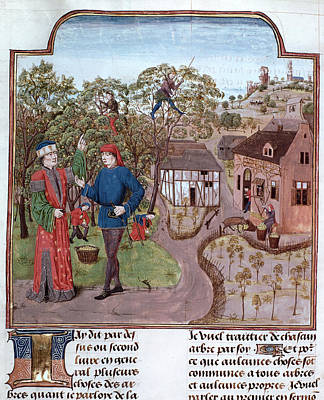 An Apple Orchard Poster by British Library