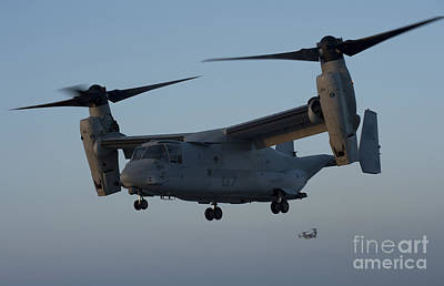 An Mv-22 Osprey Prepares To Land Poster