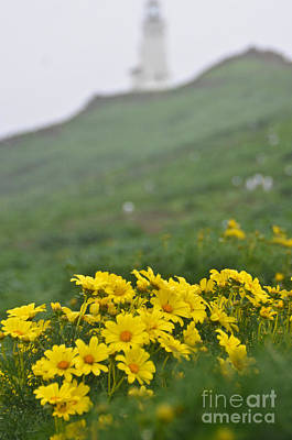 Anacapa Spring Poster
