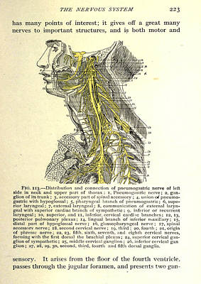 Anatomy Human Body Old Anatomical 12 Poster by Boon Mee