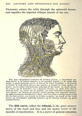 Anatomy Human Body Old Anatomical 13 Poster by Boon Mee