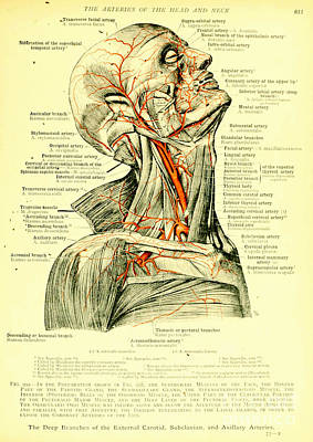 Anatomy Human Body Old Anatomical 15 Poster by Boon Mee