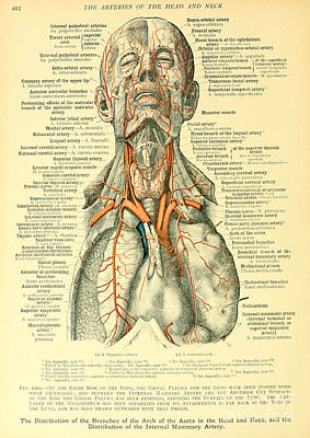 Anatomy Human Body Old Anatomical 16 Poster by Boon Mee