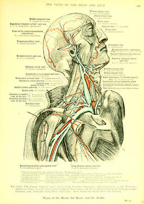 Anatomy Human Body Old Anatomical 18 Poster by Boon Mee