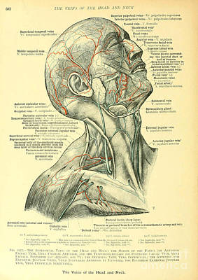 Anatomy Human Body Old Anatomical 20 Poster by Boon Mee