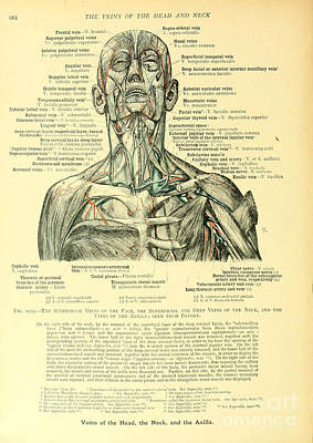 Anatomy Human Body Old Anatomical 21 Poster by Boon Mee