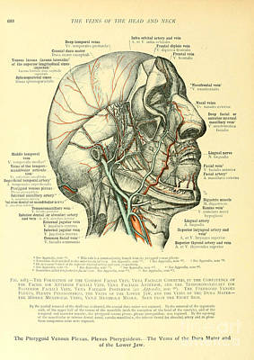 Anatomy Human Body Old Anatomical 22 Poster by Boon Mee