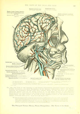 Anatomy Human Body Old Anatomical 23 Poster by Boon Mee