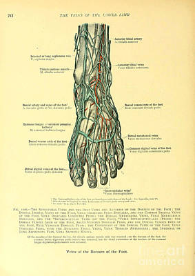 Anatomy Human Body Old Anatomical 25 Poster by Boon Mee