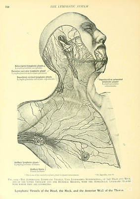 Anatomy Human Body Old Anatomical 26 Poster by Boon Mee