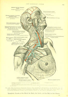 Anatomy Human Body Old Anatomical 27 Poster by Boon Mee