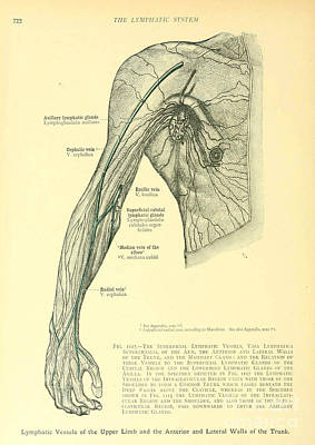 Anatomy Human Body Old Anatomical 28 Poster by Boon Mee