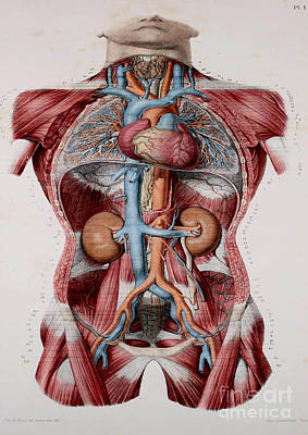 Anatomy Human Body Old Anatomical 29 Poster by Boon Mee