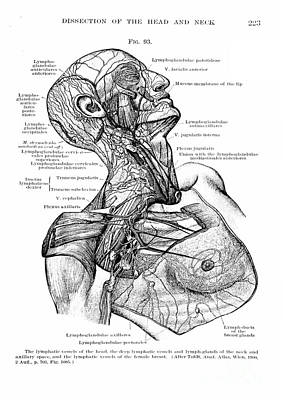 Anatomy Human Body Old Anatomical 6 Poster by Boon Mee