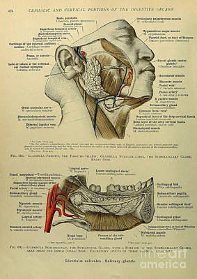 Anatomy Human Body Old Anatomical 72 Poster by Boon Mee