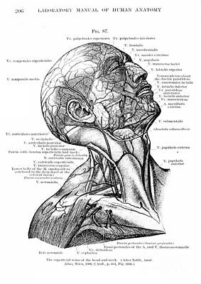 Anatomy Human Body Old Anatomical 8 Poster by Boon Mee