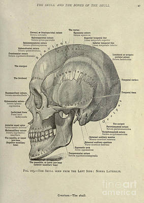 Anatomy Human Body Old Anatomical 9 Poster by Boon Mee