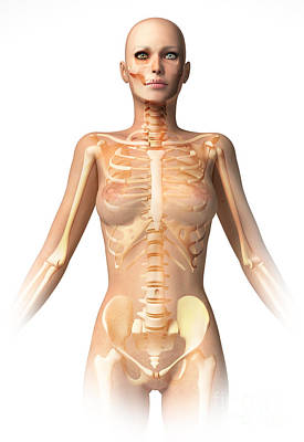 Anatomy Of Female Body With Bone Poster