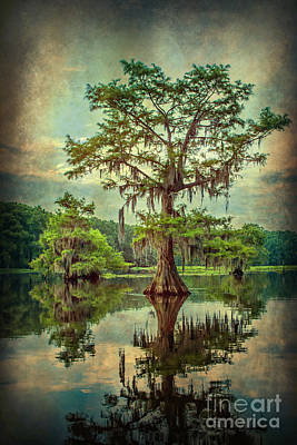 Ancestor's Cypress Poster by Tamyra Ayles