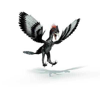 Anchiornis Feathered Dinosaur Poster