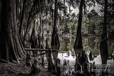 Ancien Lac Du Caddo Poster by Tamyra Ayles