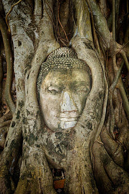 Ancient Buddha Entwined Within Tree Roots In Thailand Poster