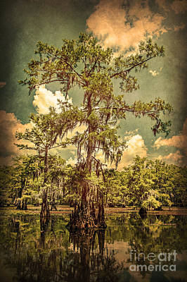 Ancient Cypress In Caddo Lake Poster