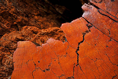 Poster featuring the photograph Ancient Log by Crystal Hoeveler