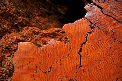 Ancient Log Poster