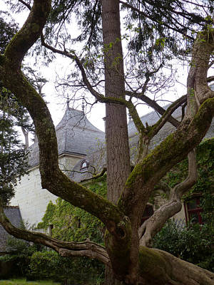Ancient Tree At Chateau De Chenonceau Poster