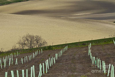 Andalusian Farmland Series-4 Poster by Heiko Koehrer-Wagner