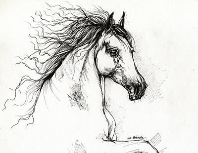 Andalusian Horse Drawing Poster