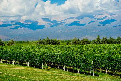 Andes Vineyard Poster