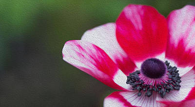 Anemone - Red Center Poster by Rebecca Cozart