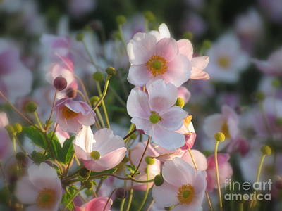 Anemones Soft Beauty Poster by France Laliberte