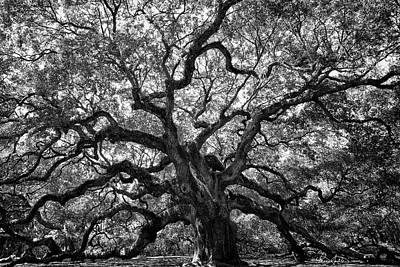 Angel Oak Poster by Renee Sullivan