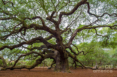 Poster featuring the photograph Angel Oak Tree by Dale Powell