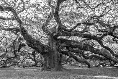 Poster featuring the photograph Angel Oak Tree by Patricia Schaefer
