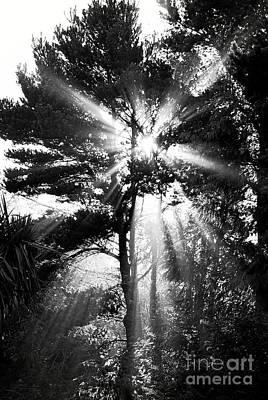 Angel Sun Poster