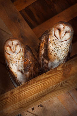 Animal - Bird - A Couple Of Barn Owls Poster by Mike Savad