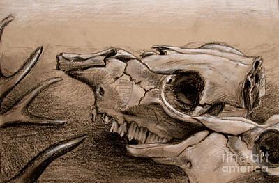 Animal Bones Poster