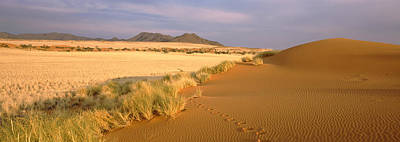 Animal Tracks On The Sand Dunes Towards Poster by Panoramic Images