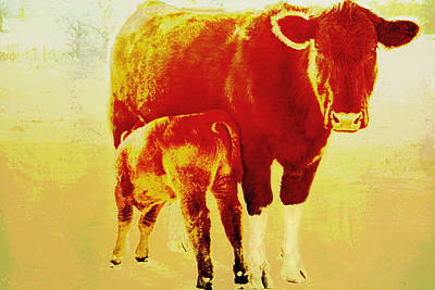 Animals Cow And Calf Poster