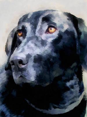 animals - dogs - Black Lab Poster
