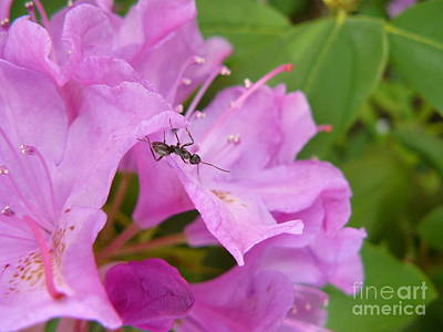 Ant On Flower Poster