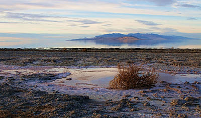 Poster featuring the photograph Antelope Island - Tumble Weed by Ely Arsha