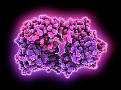 Anti-rotavirus Antibody Poster