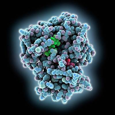 Antibiotic Resistance Enzyme Molecule Poster