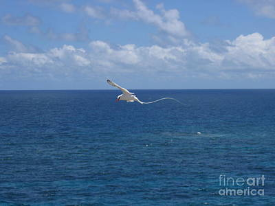 Poster featuring the photograph Antigua - In Flight by HEVi FineArt