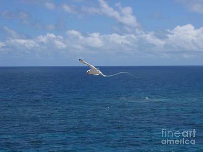 Antigua - In Flight Poster